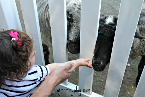 Farm animals NJ