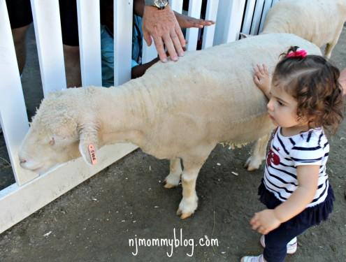 Petting Zoo NJ