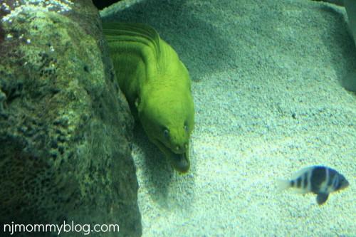 Jenkinsons Aquarium NJ