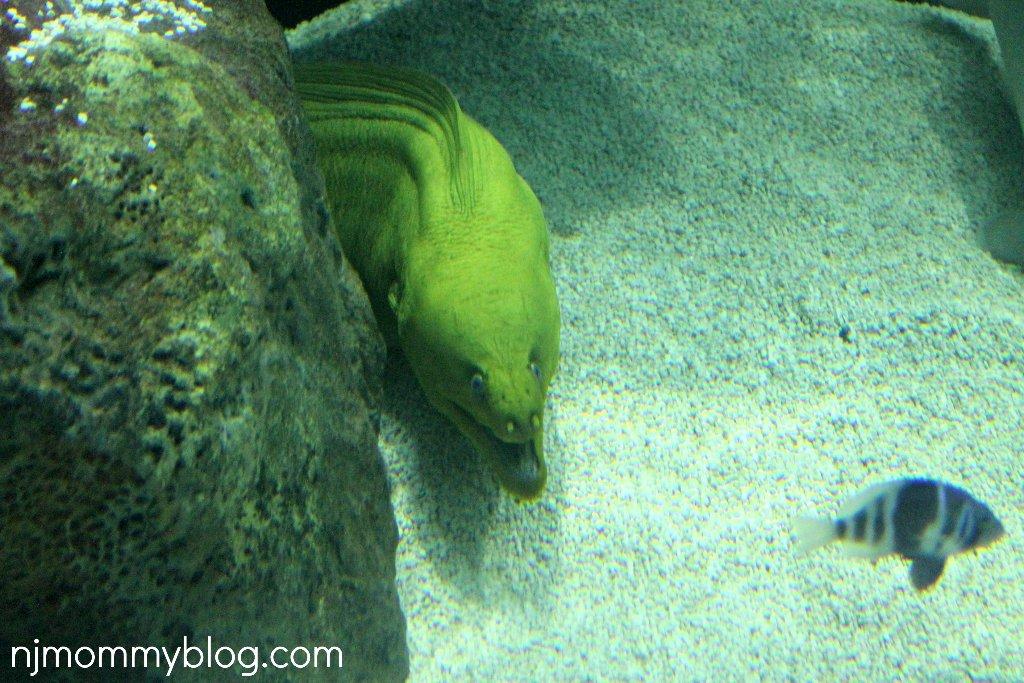 Jenkinsons Aquarium & Boardwalk in Point Pleasant NJ | NJ