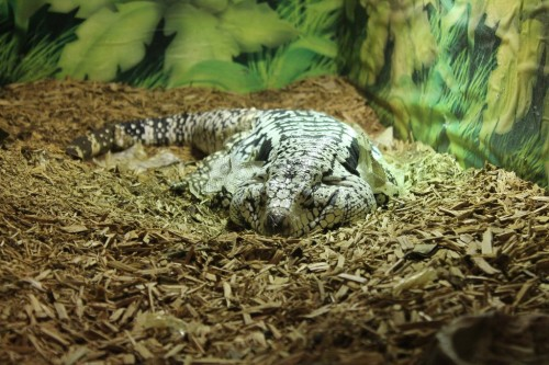 reptile exhibits nj