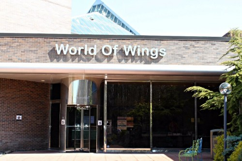 world of wings butterfly museum